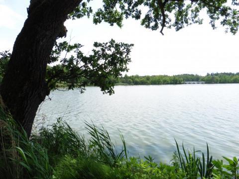 rybník u Staré  Hlíny