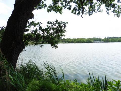 rybník Vítek u Hlíny